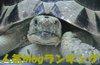 Imga1361_sh01_3