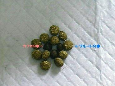 Imga2140_sh01